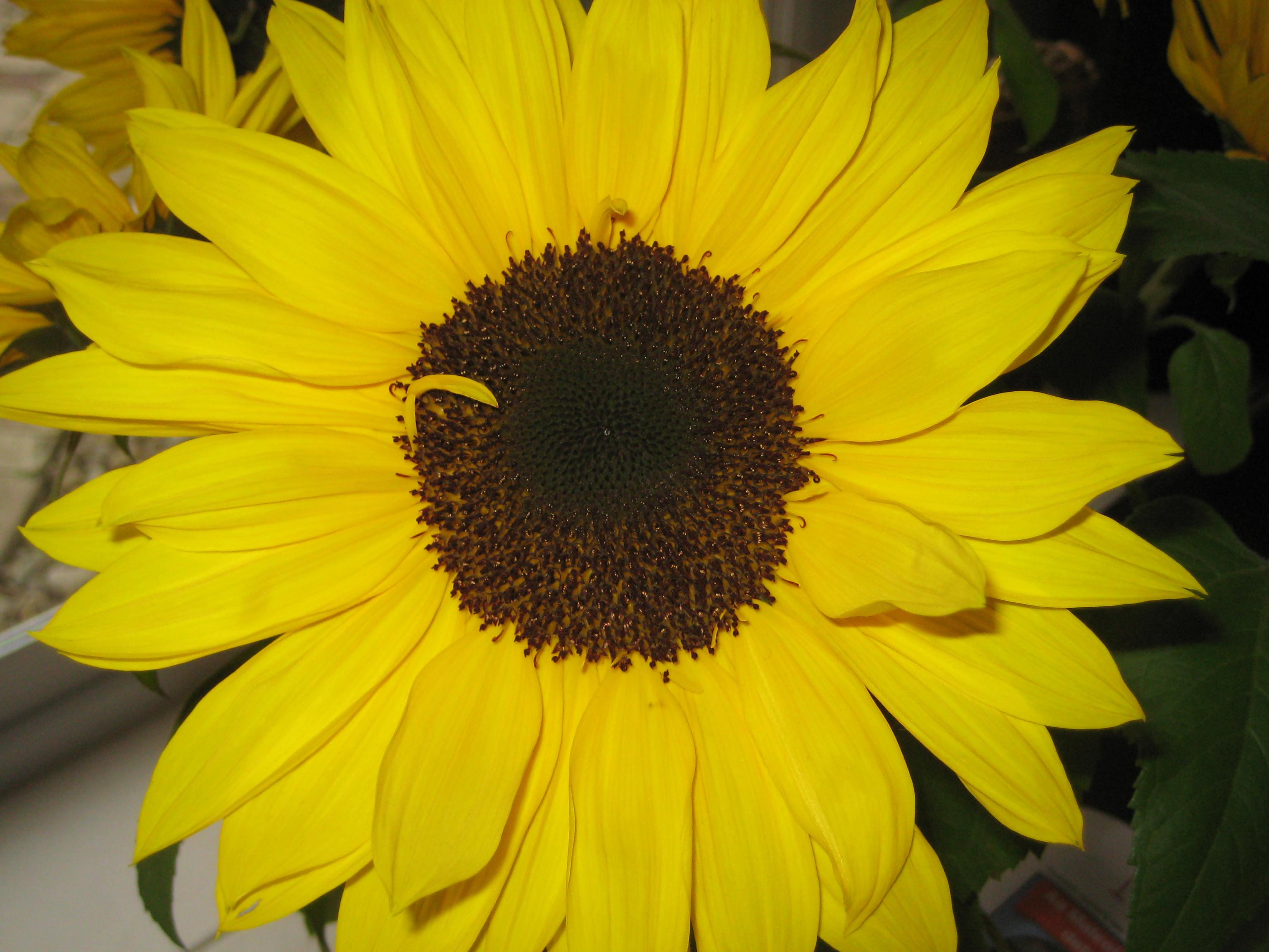Just Like Martha Fiskars Colour Me Happy Challenge Yellow