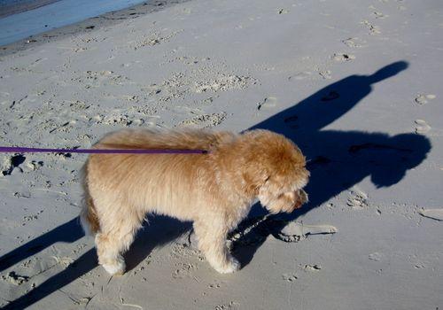 Maddie - shadow 2
