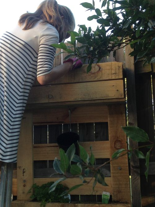 Herb Garden - making