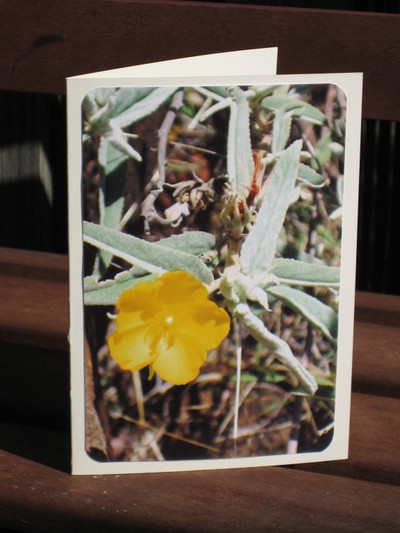 Wildflower2_undara_national_park_3