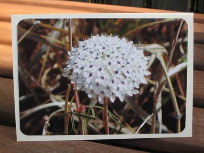 Wildflower_undara_national_park_7